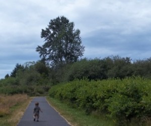 The paved path at Charlotte's Blueberry Park is bordered by bushes and grass, making for a lovely walk