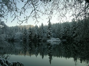 If you already have a Discover Pass, you can experience winter wonderlands like this one for yourself at Lake Sylvia State Park. Photo courtesy of Washington State Parks.