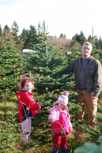 Pierce County Christmas tree farms