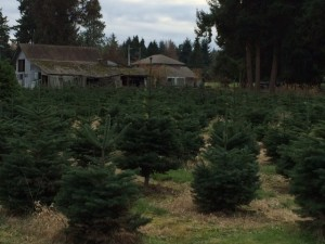 In Puyallup, Double Four Tree Farm started 33 years ago and today has a fun-filled menagerie of turkeys, pheasants and other farm animals.