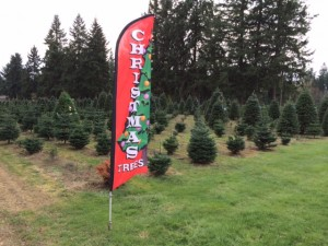 From Auburn to Eatonville, Port Orchard to Puyallup, Christmas trees are big business in this region, including family farms that have been selling evergreens and crafts for more than 20 years.
