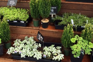 Get Growing at South Sound Nurseries and Garden Shops SouthSoundTalk