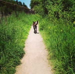 Let your dog have its day at one of the region's many off-leash dog parks. Photo credit: Sarah Leslie.