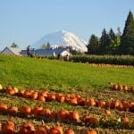 tacoma pumpkin patch