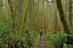 Mukai Pond, a local favorite at Island Center Forest on Vashon Island. Photo courtesy: Vashon Island Trust.