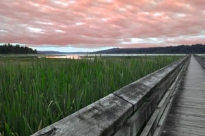 Beautiful Hood Canal Sunset from a boardwalk at the Theler Wetlands Nature Preserve in Belfair. Photo courtesy: Theler Wetlands Nature Preserve.