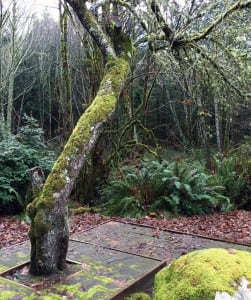 Concerned about moss growth in other parts of your yard? Mike Bell says moss growth on bark and branches won't harm the health of your trees.