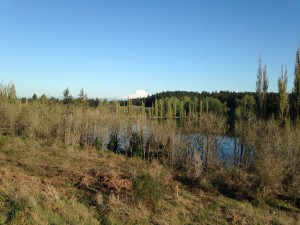 On a clear day, Mount Rainier can be seen peeking out above Waughop Lake at Fort Steilacoom Park.