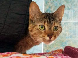 Featured Pet Winifred #A515834