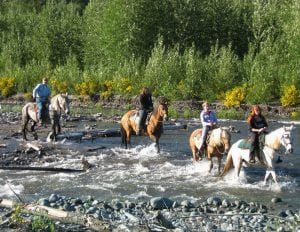Riding Horses in South Sound