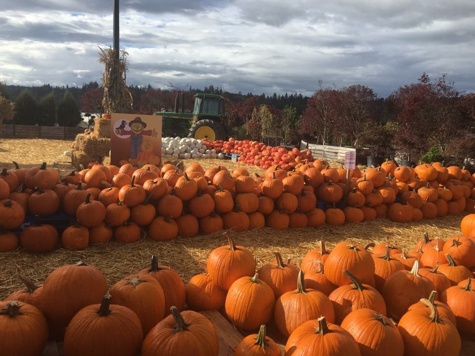 South Sound Pumpkin Patches Sterino Farms