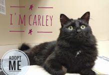 The Humane Society for Tacoma & Pierce County Carley