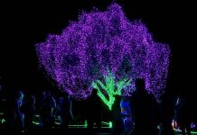 Flame tree Zoolights