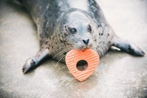 Point Defiance Zoo Valentine's Day