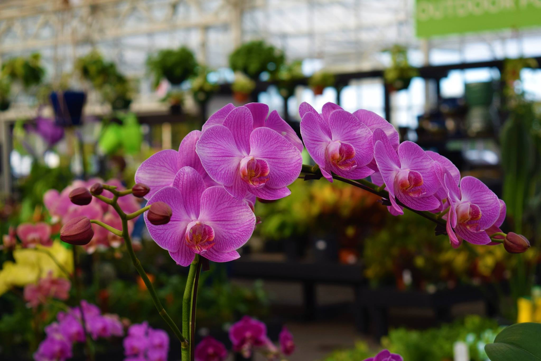 Watson S Greenhouse And Nursery Your Destination For Indoor