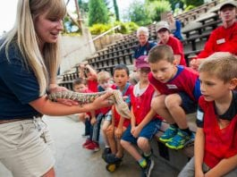 Point Defiance Zoo Camps