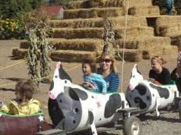 Schilter Family Farm cow train