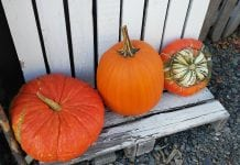 Pierce County Pumpkin Patches