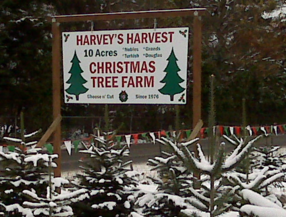 Once you've cut your tree and loaded it on your vehicle, stay awhile and enjoy a hot cup of cocoa, spiced cider or coffee around their outdoor fire pit. Photo credit: Harvey's Harvest Christmas Tree Farm