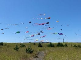 Grays Harbor Kites