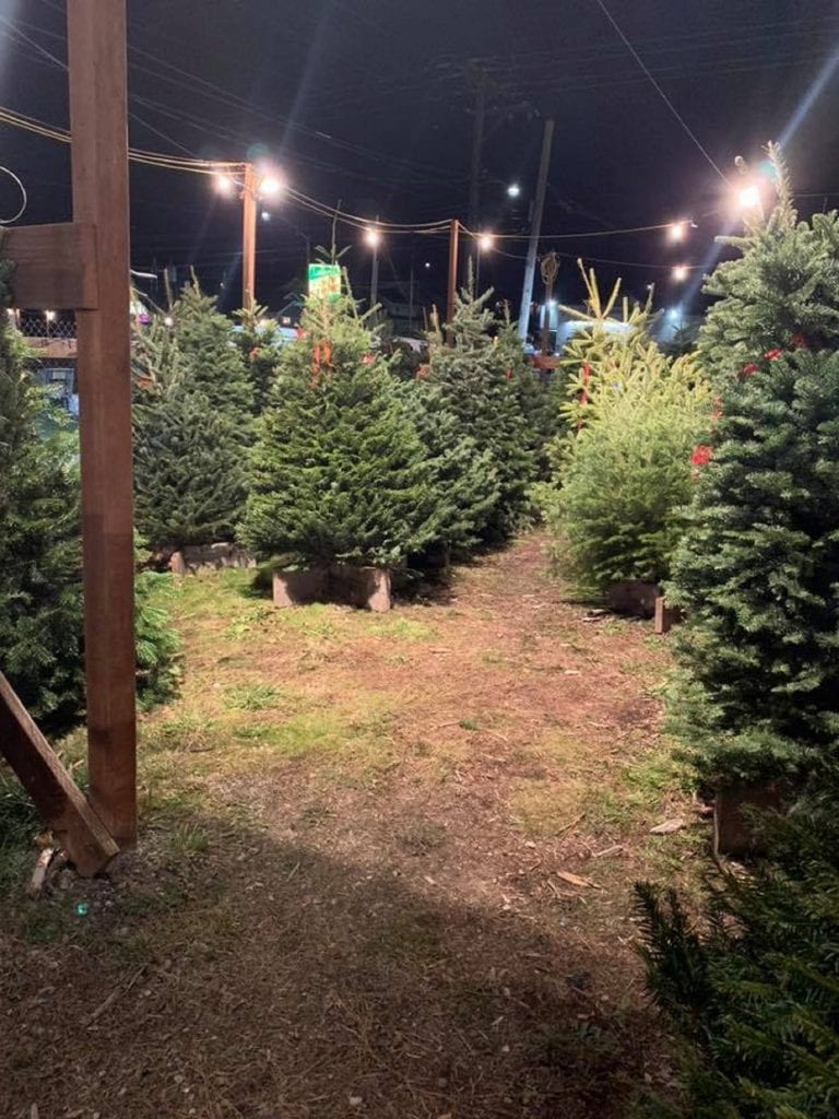 Christmas Trees in Pierce County