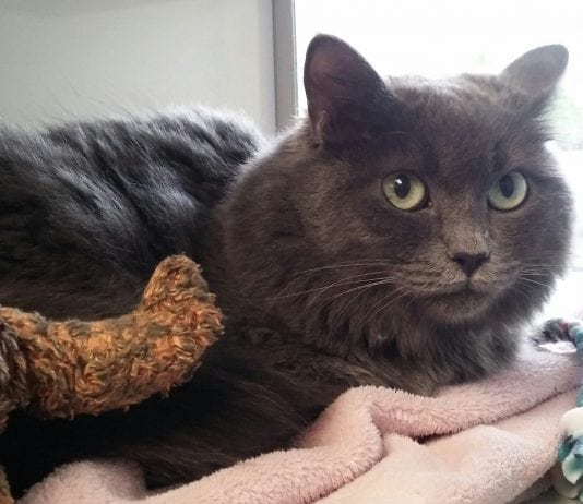 Humane Society Featured Pet