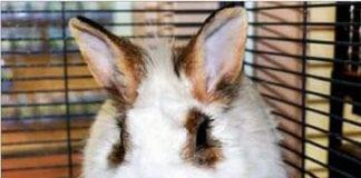 Tacoma Humane Society Featured Pet