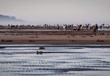 Razor clams on Long Beach