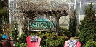 Watson's Nursery