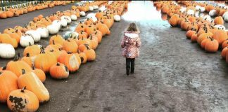 South Sound Pumpkin Patches