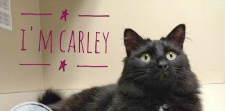 The Humane Society for Tacoma & Pierce County Carley