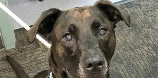 The Humane Society for Tacoma & Pierce County Featured Pet Sydney