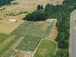 Rutledge Corn Maze
