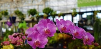 Watson's Greenhouse and Nursery