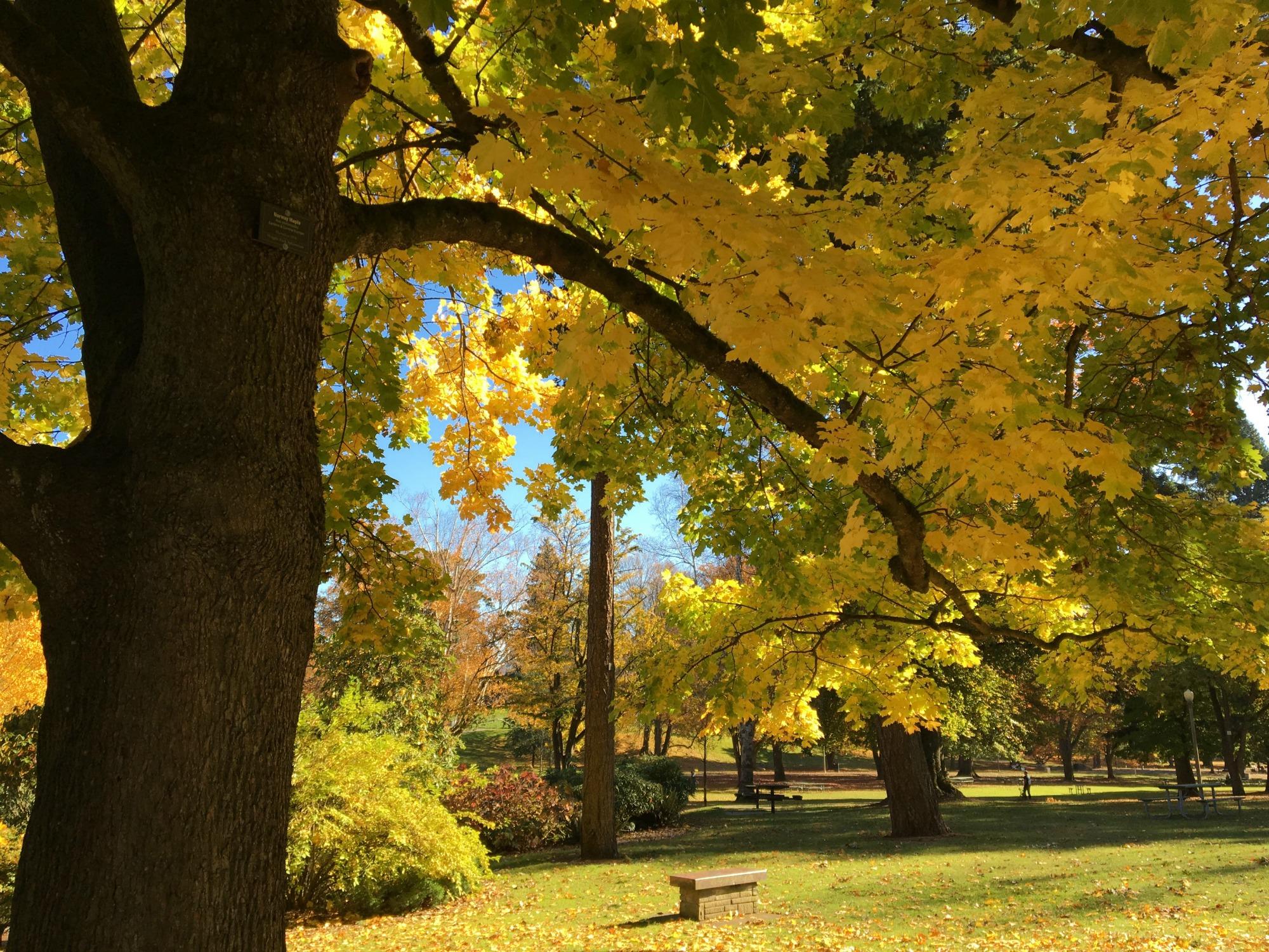 The Best Fall Leaf Peeping Spots in Pierce County - SouthSoundTalk