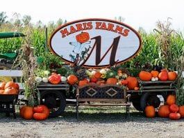 Maris Farms