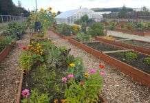 Dupont Community Garden