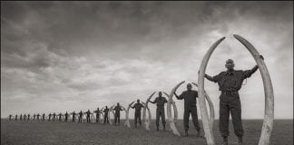 Rangers with Tusks of Killed Elephants