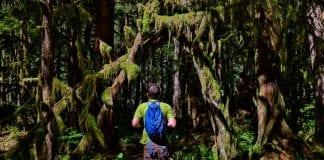 Carbon River Rainforest Mount Rainier