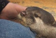 Debbie Doolittle's Otter Experience
