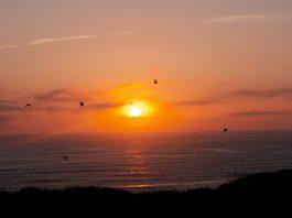 grays harbor sunset