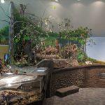 Tacoma Nature Center Exhibits