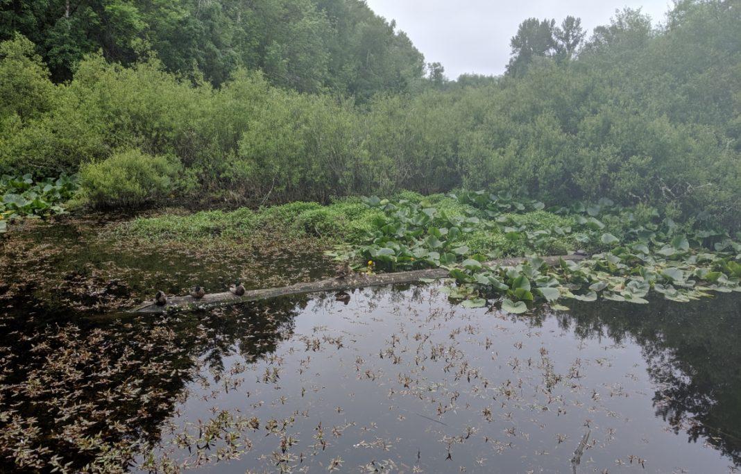 Snake Lake