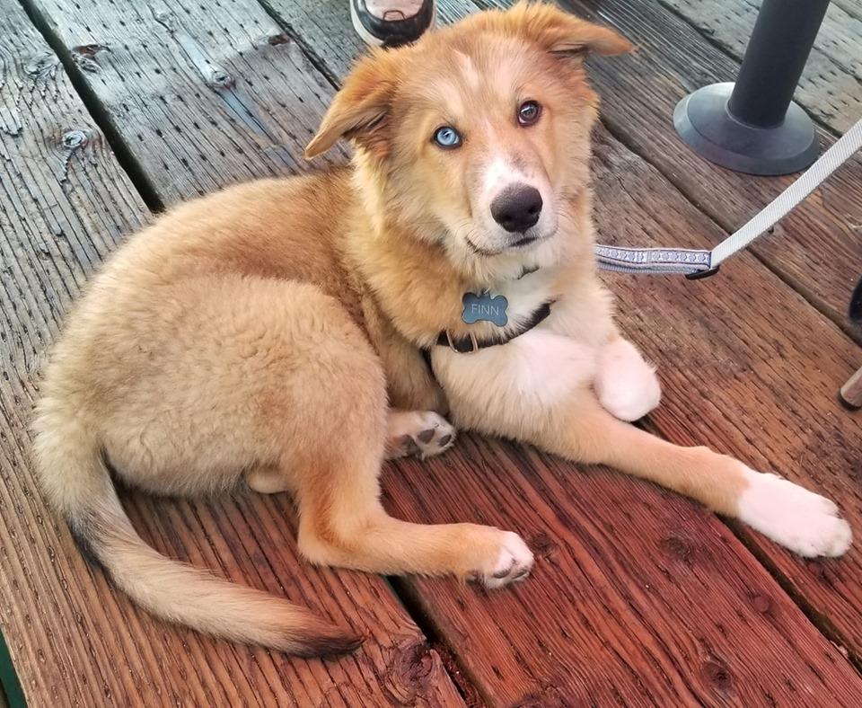 Dog friendly restaurants Tacoma