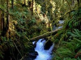 Rainforest in Quinault