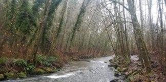 Chambers Creek from Kobayashi Park