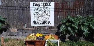 Food is Free Tacoma