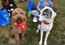 Humane Society for Tacoma and Pierce County Dog-A-Thon